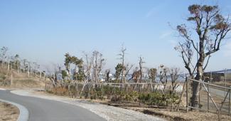 平成21年度海の森公園整備工事イメージ画像